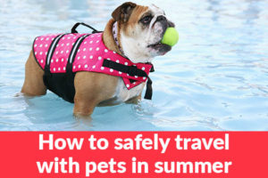 How to safely travel with pets in summer 1