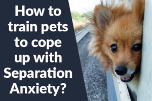 How to train pets to cope up with Separation Anxiety