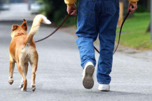 5 Things to Know About Moving Your Pets