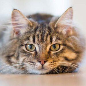 International Pet Relocation Import