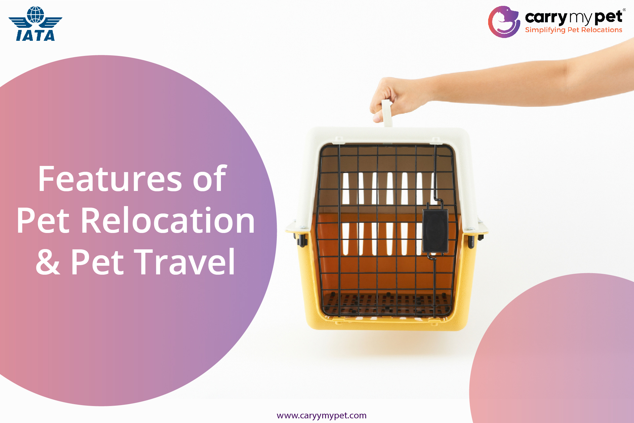 features of pet relocation and pet travel-01