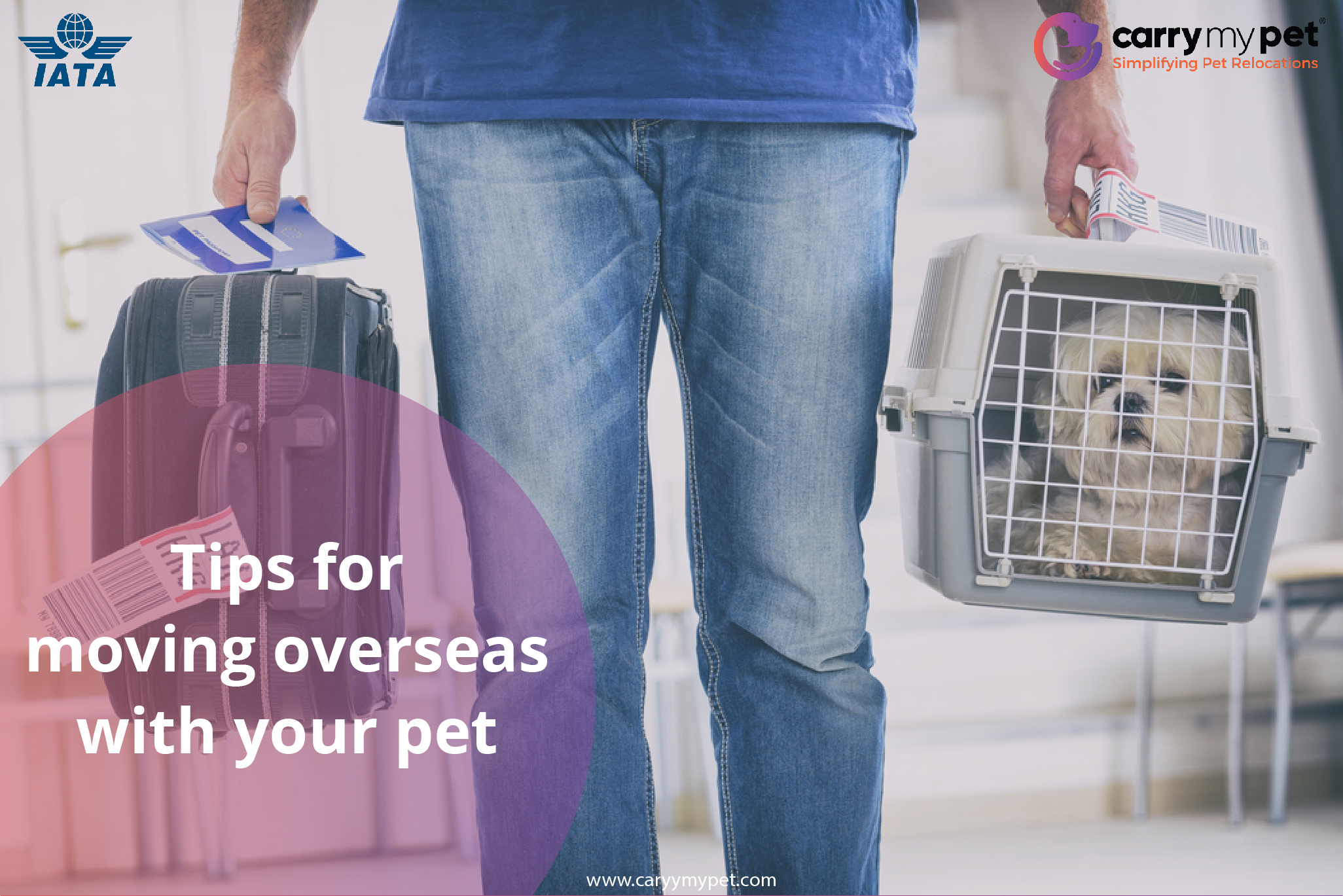 tips for moving with your pet internationally-01