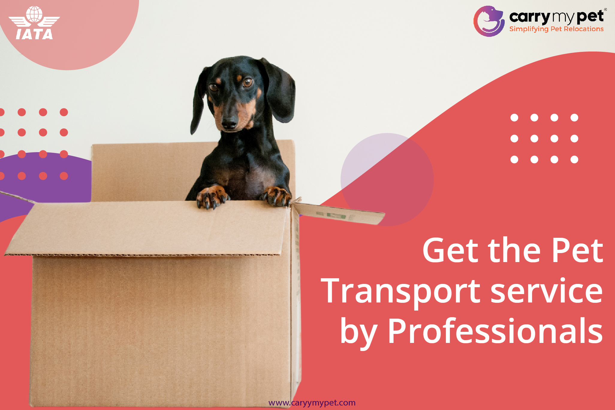 Get the pet trasport service by professionals-01-01