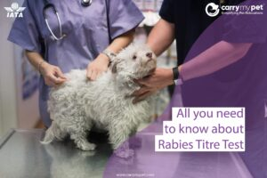 all-u-need-to-know-about-rabies-titre-test