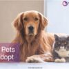 Best pets to adopt-01