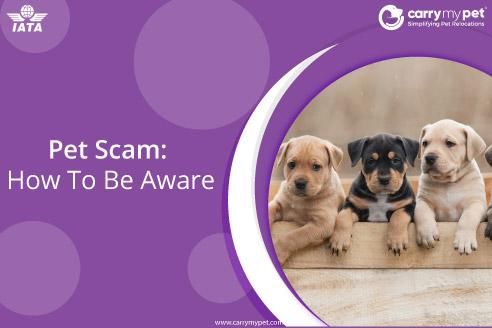 Pet-scam